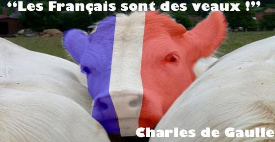 les-francais-sont-des-veaux