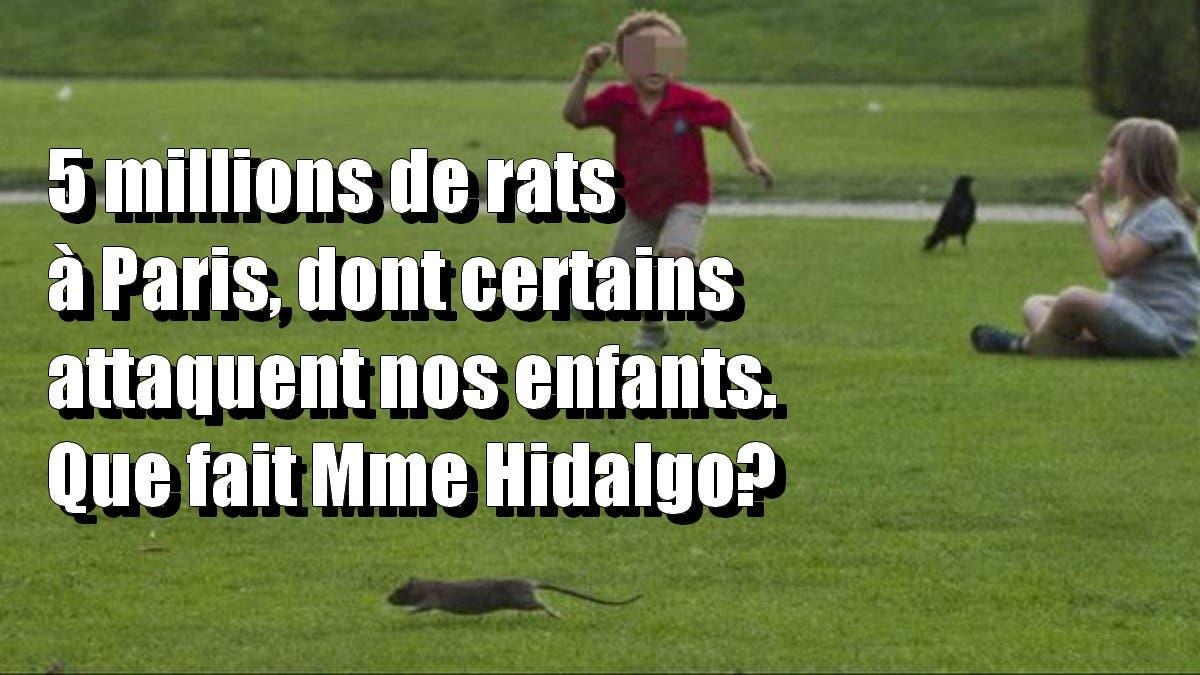 5 rats